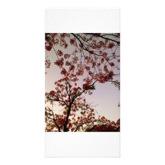 Fleurs Photocartes