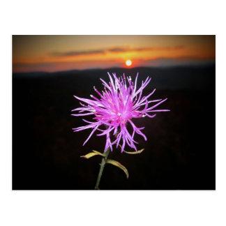 fleurs carte postale
