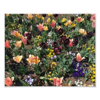 Fleurs colorées dans un jardin photographies