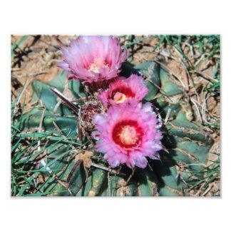 Fleurs de cactus photo d'art