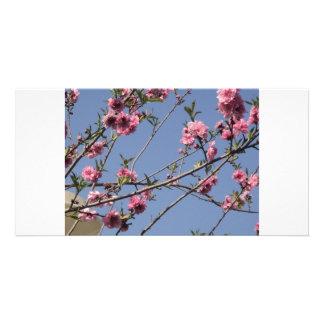 Fleurs de cerise cartes de vœux avec photo