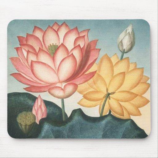 Fleurs de Lotus - protection de Lotus d'illustrati Tapis De Souris