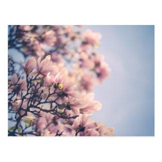 Fleurs de magnolia cartes postales