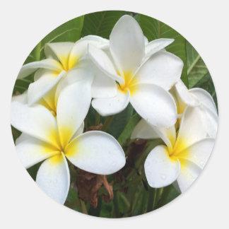 Fleurs de Plumeria d'Hawaï Sticker Rond