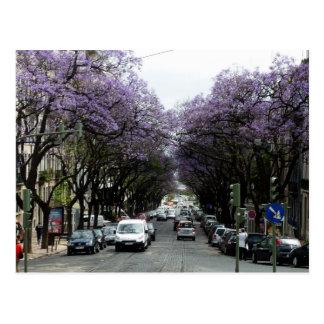 Fleurs de pourpre de Lisbonne Cartes Postales