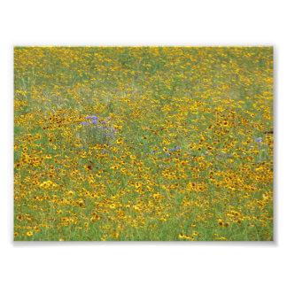 Fleurs de prairie photo d'art