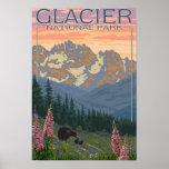Fleurs de ressort - parc national de glacier, la T Poster