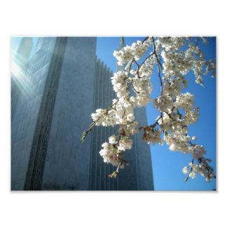 Fleurs de temple de C.C Impression Photo
