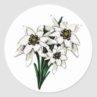 Fleurs d'edelweiss autocollant rond