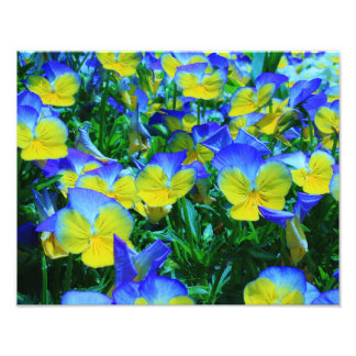 Fleurs d'été impressions photographiques