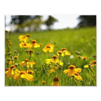 Fleurs ensoleillées dans un domaine photo