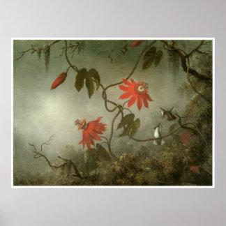 Fleurs et colibris de passion