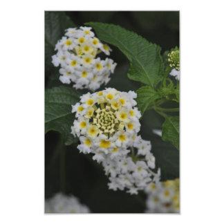 Fleurs - Flores Tirage Photo
