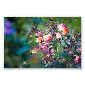 Fleurs froides photographe