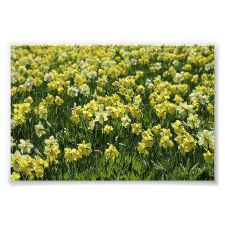 fleurs jaunes photographies