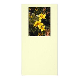 Fleurs jaunes. Bidens. Sur la crème Cartes De Vœux Avec Photo