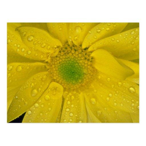 Fleurs jaunes de fleur cartes postales