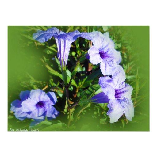 Fleurs lilas  tirage photo