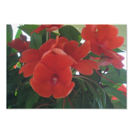 Fleurs oranges photographe