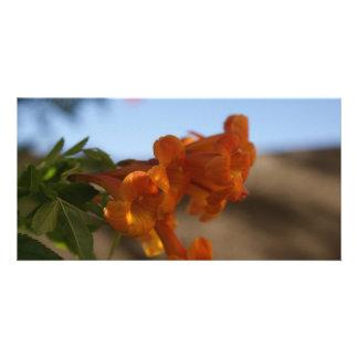 Fleurs oranges photocarte customisée