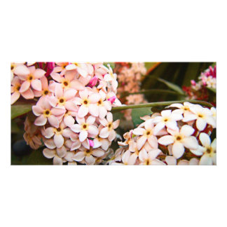 Fleurs Photocarte Customisée