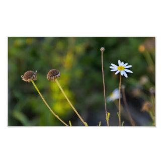 Fleurs Photographie D'art