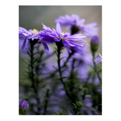 Fleurs pourpres carte postale