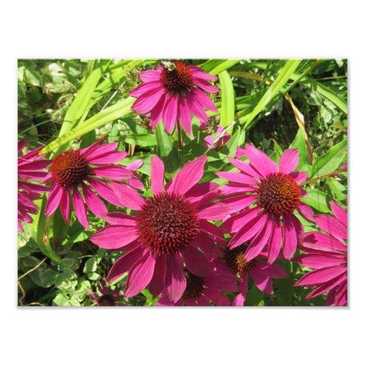 Fleurs pourpres de cône impressions photographiques