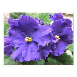 Fleurs pourpres de violette africaine photographies