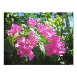 Fleurs roses  tirage photo