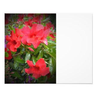 Fleurs rouges photos d'art