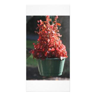 fleurs rouges de chute cartes avec photo