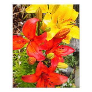 Fleurs rouges et jaunes tirage photo