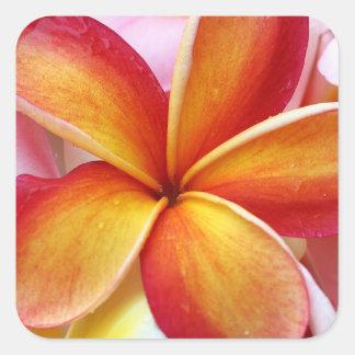 Fleurs rouges jaunes d'Hawaï de Frangipani de Sticker Carré