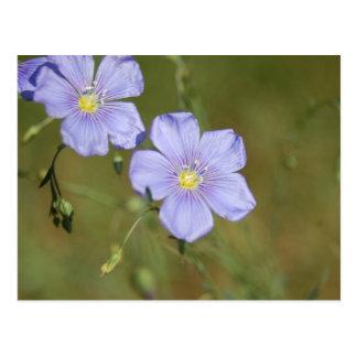 Fleurs sauvages 2 de lin carte postale