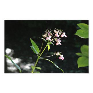 Fleurs sauvages au-dessus de courant  tirage photo