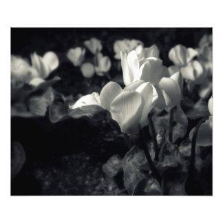 Fleurs sous le clair de lune photos d'art