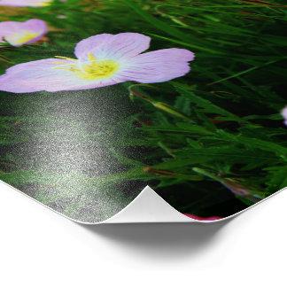 Fleurs sur le Horizion Photo D'art