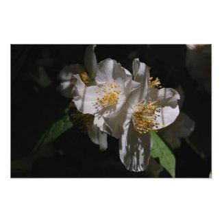 Fleurs sur le mur photographies