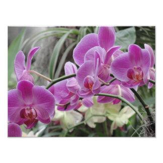 Fleurs tropicales photos d'art