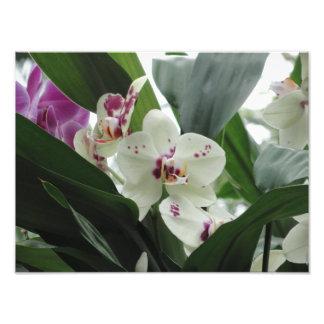 Fleurs tropicales pourpres et blanches photo sur toile