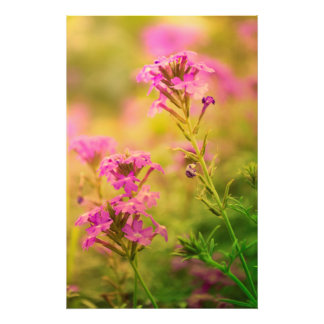 Fleurs violettes photo d'art