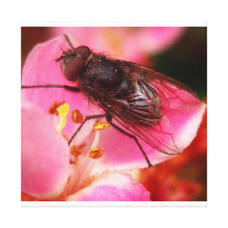 Fliege auf Blume Leinwanddruck