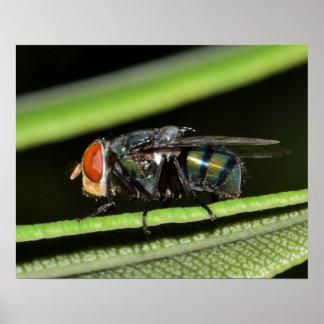 Fliege Poster