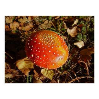 Fliegen-Blätterpilz-Pilz-Plakat Poster