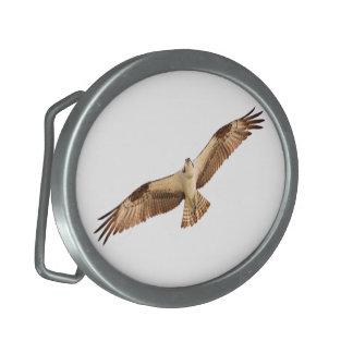 Fliegen-Falke-Gürtelschnalle Ovale Gürtelschnallen