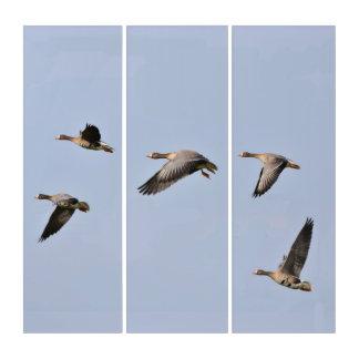 Fliegen-Gänse Triptychon