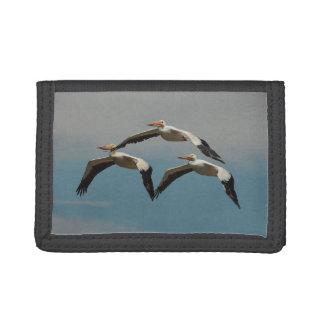 Fliegen-Pelikan 4