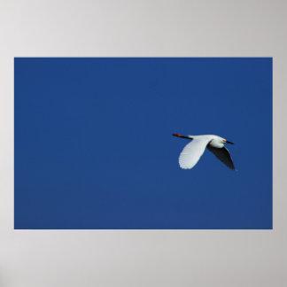 Fliegen-Reiher Poster