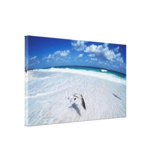 Fliegen-Seemöwe auf dem Strand Leinwanddruck